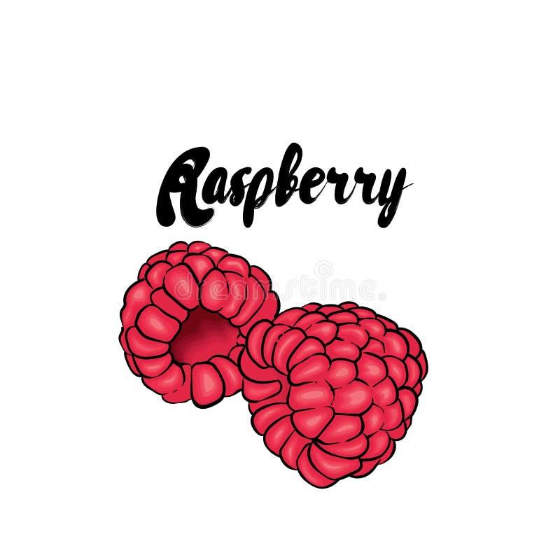 красивейшая поленика также вектор иллюстрации притяжки corel fruits тропическо иллюстрация штока