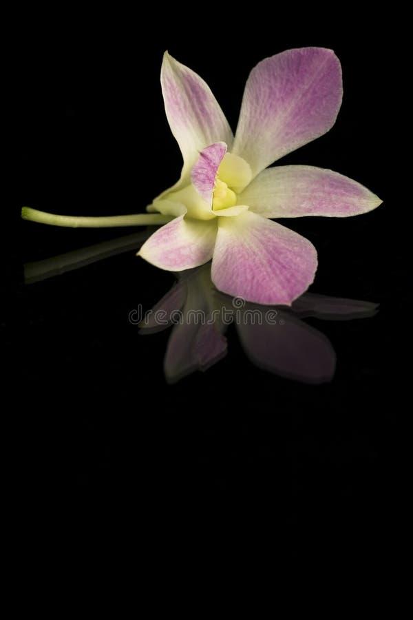 Красивейшая пурпуровая орхидея стоковые изображения
