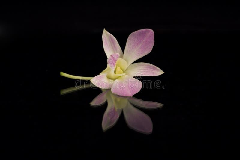 Красивейшая пурпуровая орхидея Стоковые Фото