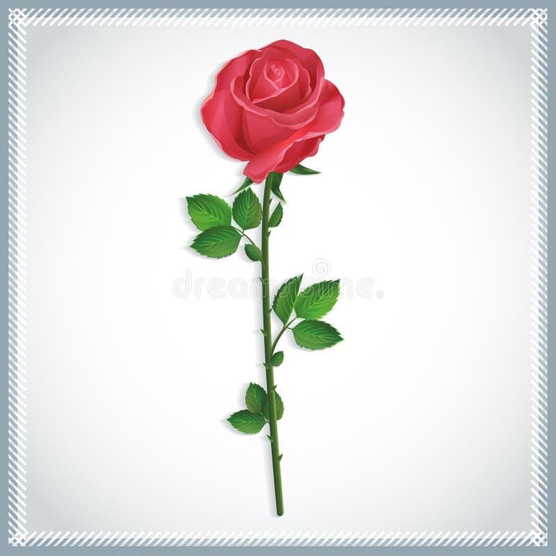 Роза красного цвета цветка   бесплатная иллюстрация