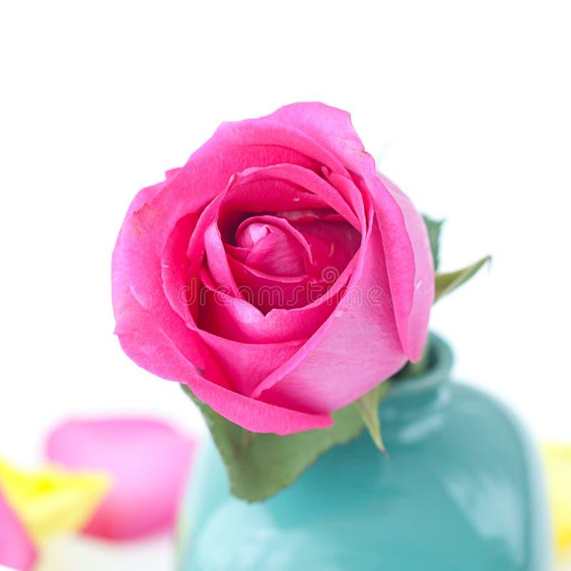 Роза пинка в вазе и лепестках стоковые изображения rf