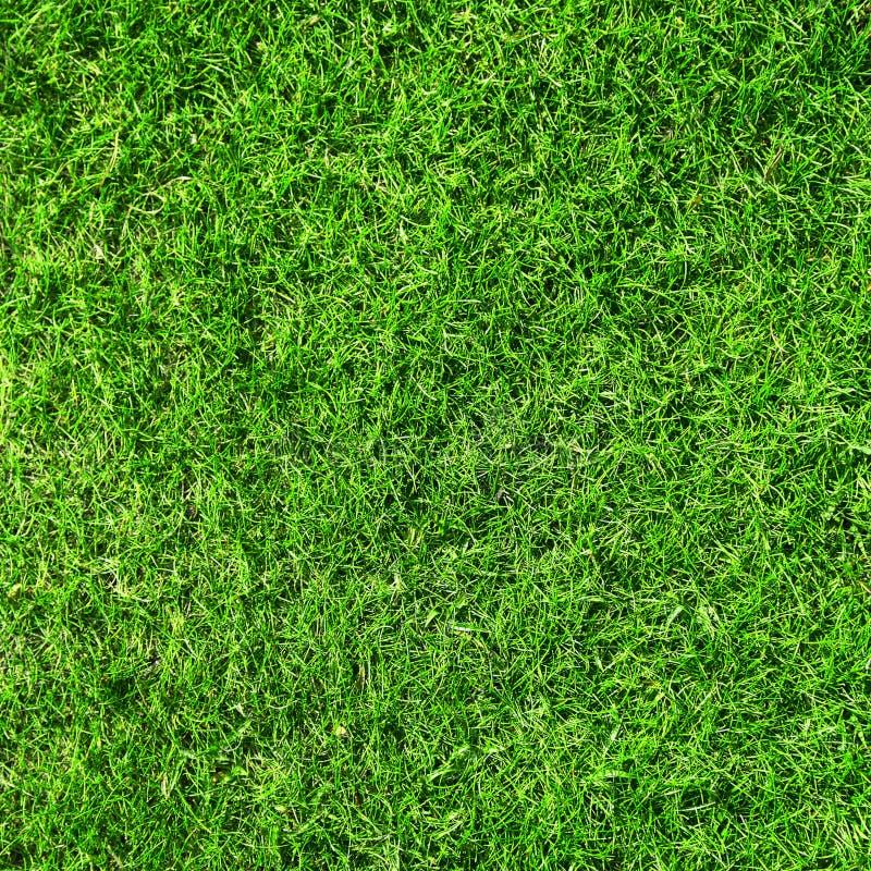красивейшая текстура зеленого цвета травы стоковое фото