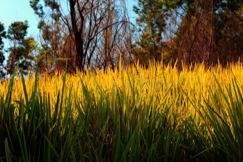 красивейшая трава стоковое изображение