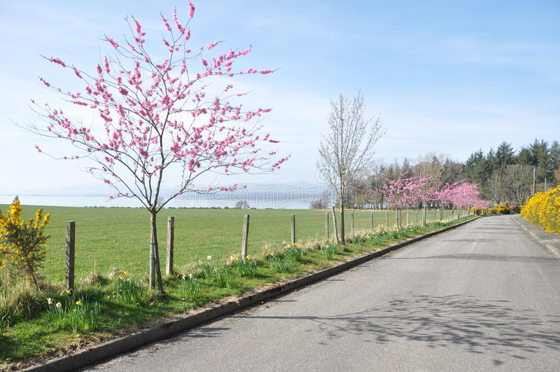 красивейшее время весны приватной дороги стоковое изображение