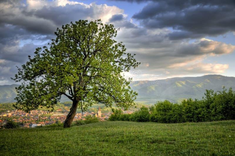 красивейшее драматическое небо ландшафта стоковые изображения rf