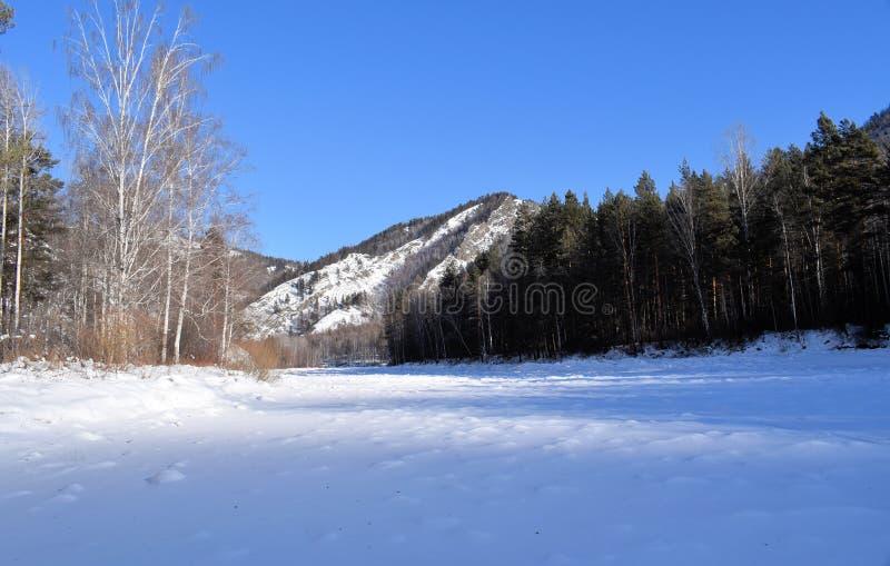 Красивейшее изображение зимы landscape Горы и березы Сибирь Khakassia стоковое изображение