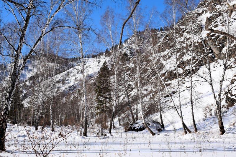 Красивейшее изображение зимы landscape Горы и березы Сибирь Khakassia стоковая фотография