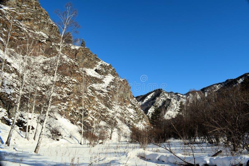 Красивейшее изображение зимы landscape Горы и березы Сибирь Khakassia стоковая фотография rf
