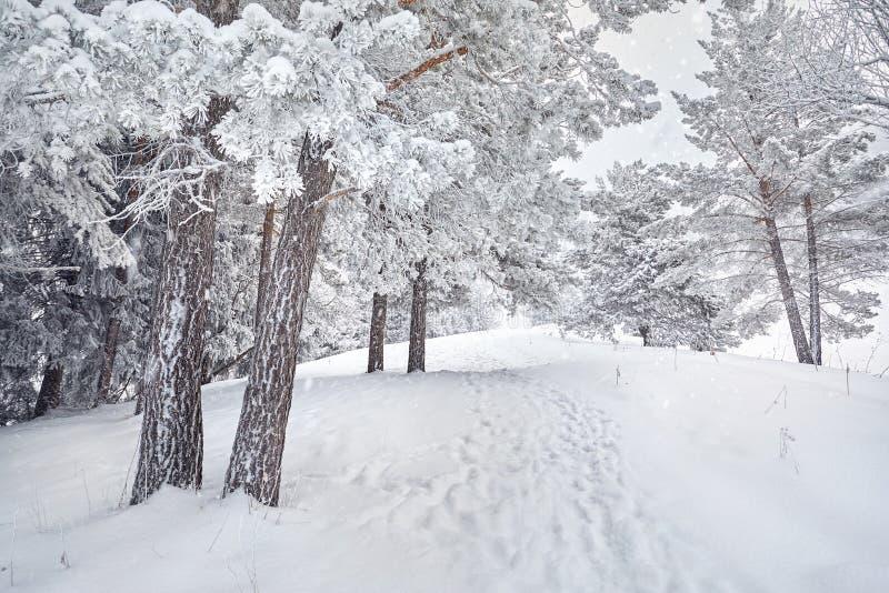 Download Красивейшее изображение зимы Landscape Стоковое Изображение - изображение: 106251517