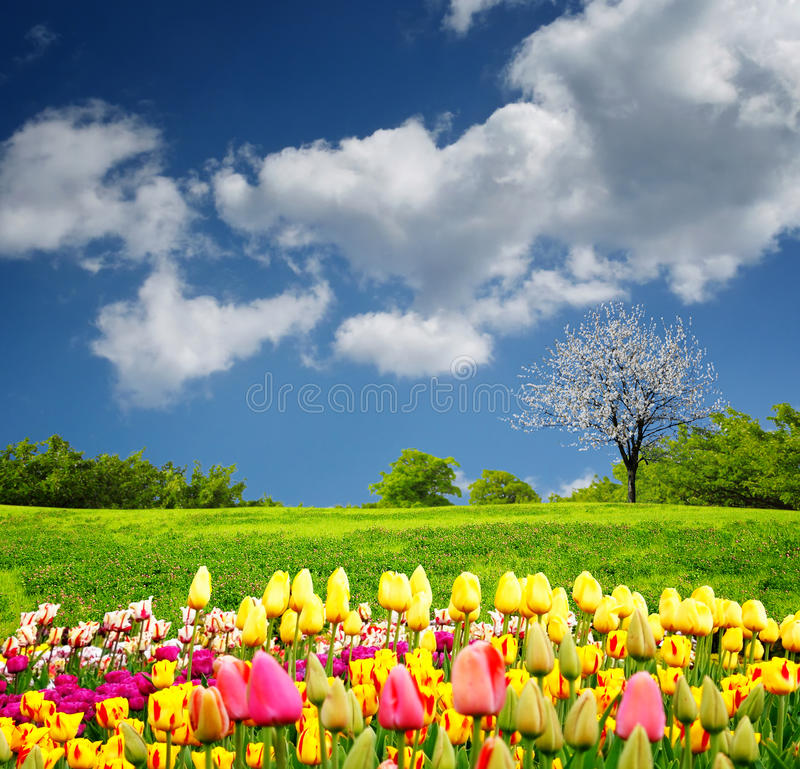 Красивейшее поле весны стоковое изображение rf
