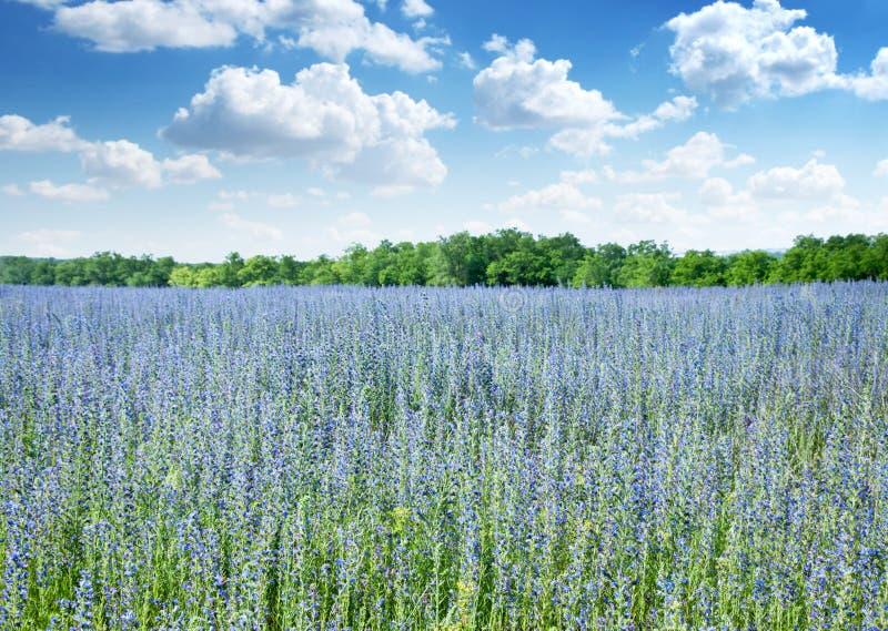 красивейшее поле цветет одичалое стоковая фотография