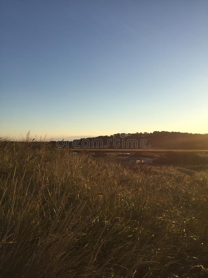красивейшее поле стоковое изображение rf