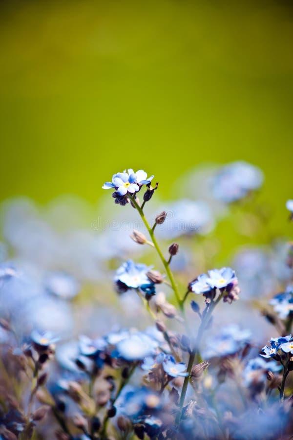 красивейшие голубые цветки немногая стоковое изображение