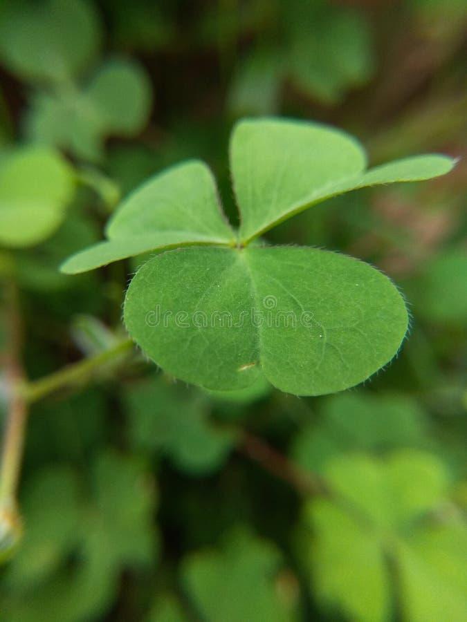 красивейшие зеленые листья стоковая фотография