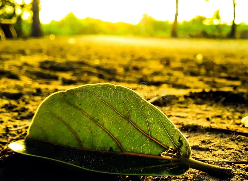 Красивейшие листья стоковые фотографии rf