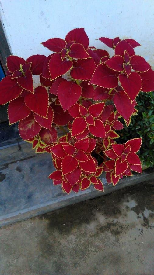 красивейшие листья стоковое изображение rf