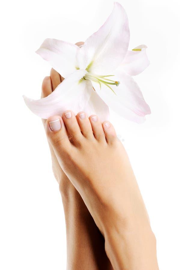 красивейшие ноги женщины цветут здоровая лилия стоковое изображение rf