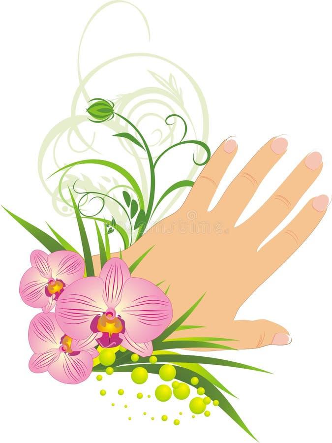 красивейшие орхидеи французского manicure иллюстрация штока