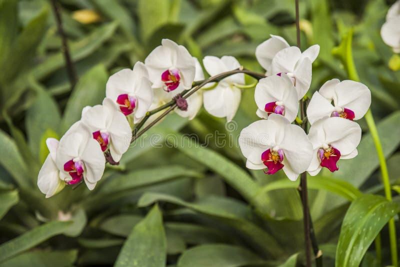 красивейшие орхидеи стоковые фото
