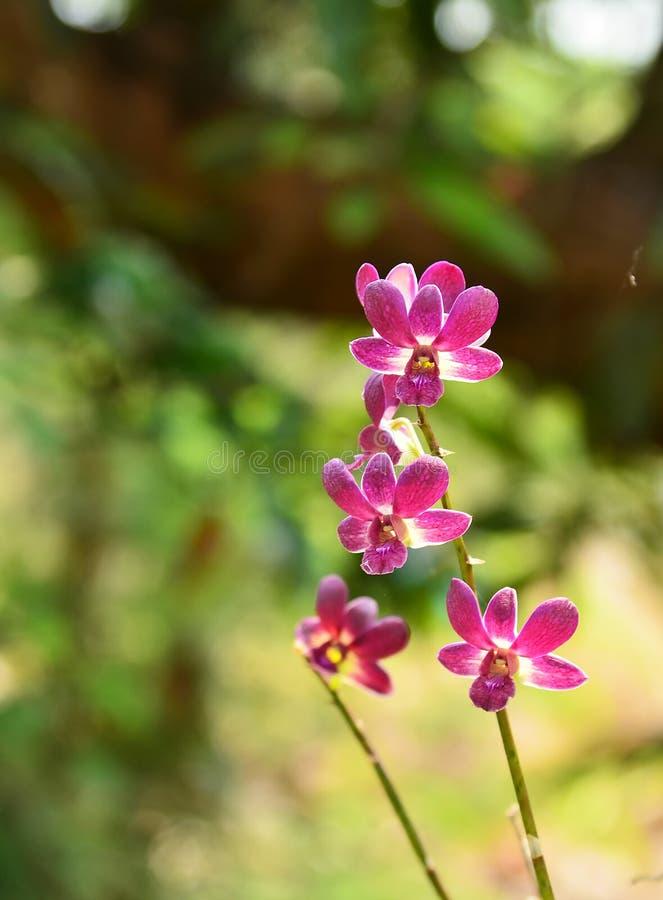красивейшие орхидеи стоковые изображения