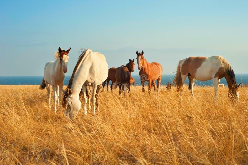 красивейшие лошади стоковые фотографии rf