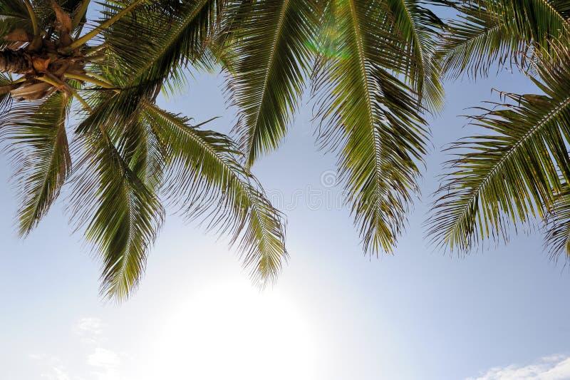 красивейшие пальмы стоковые фото