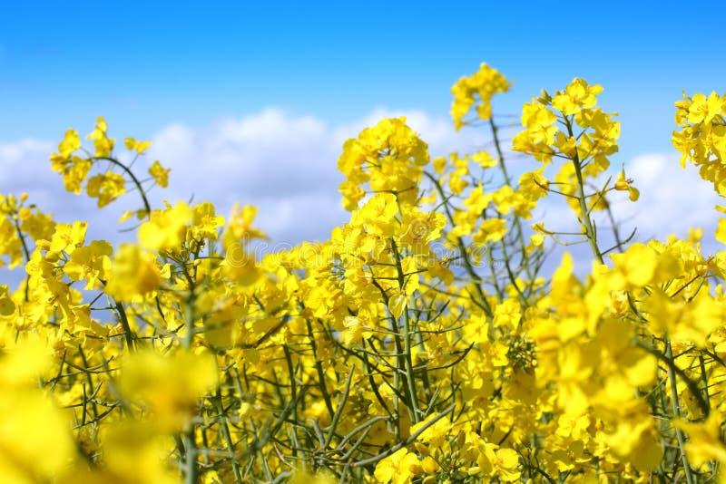 красивейшие поля насилуют весеннее время стоковые изображения