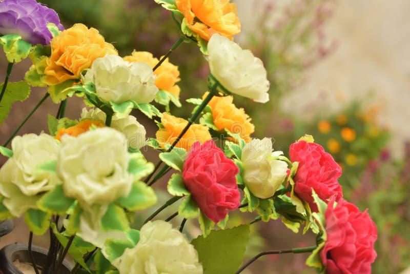 красивейшие розы стоковые изображения rf