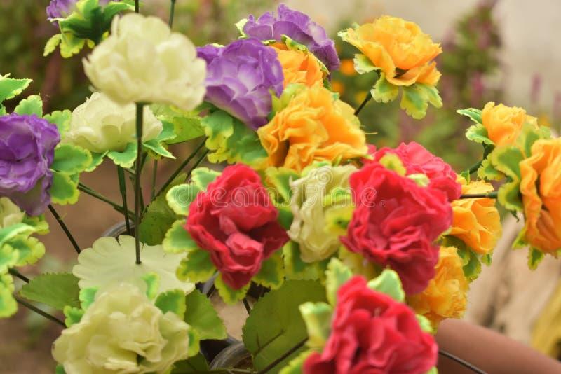 красивейшие розы стоковая фотография rf