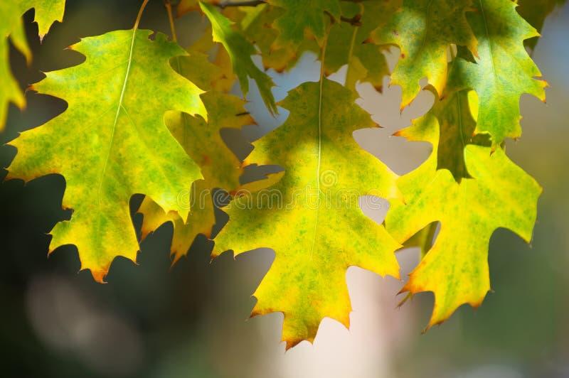 Красивейшие цветастые листья осени стоковая фотография rf
