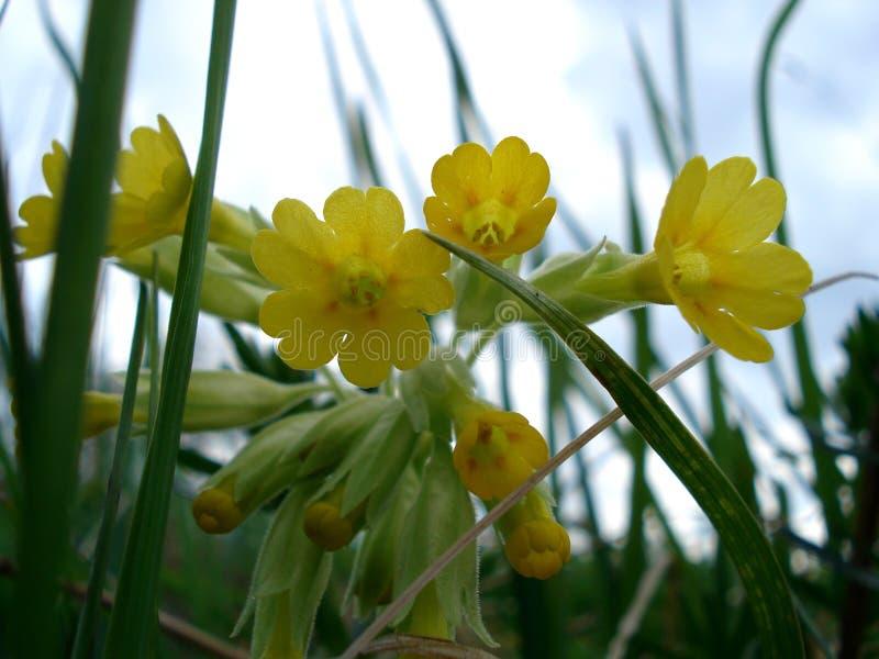 красивейшие цветки европы могут viciifolia весеннего времени salvia pratensis onobrychis природы стоковые изображения rf