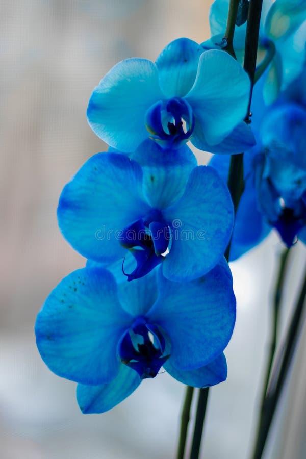 красивейшие цветки Как раз как семья стоковые фотографии rf