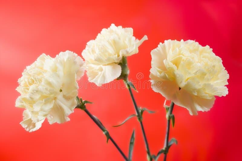 красивейшие цветки мягкие стоковые изображения