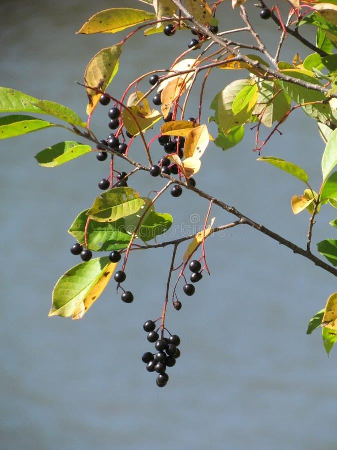 красивейшие ягоды стоковые изображения rf