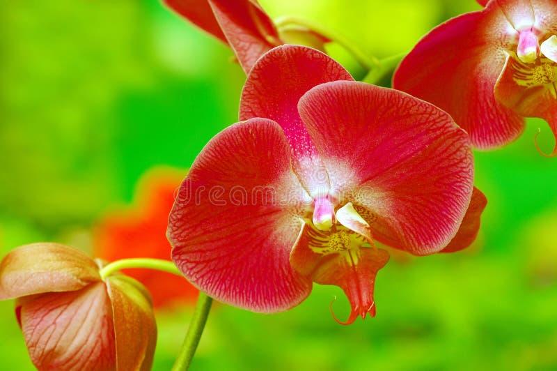 красивейшие яркие орхидеи стоковые изображения