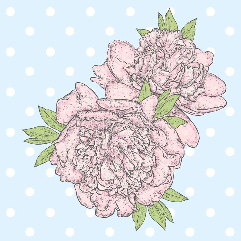 красивейшие peonies Винтаж иллюстрация штока