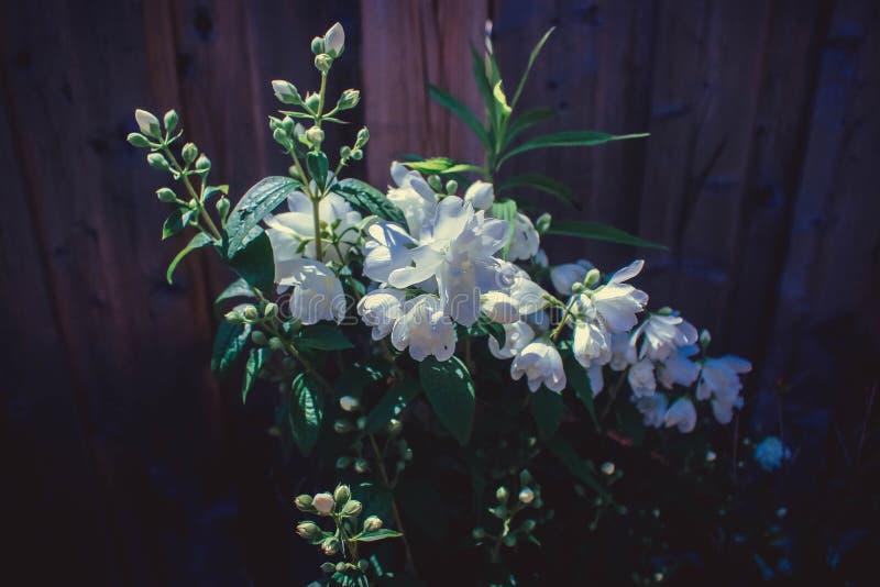 Красивейший белый цветок стоковые изображения