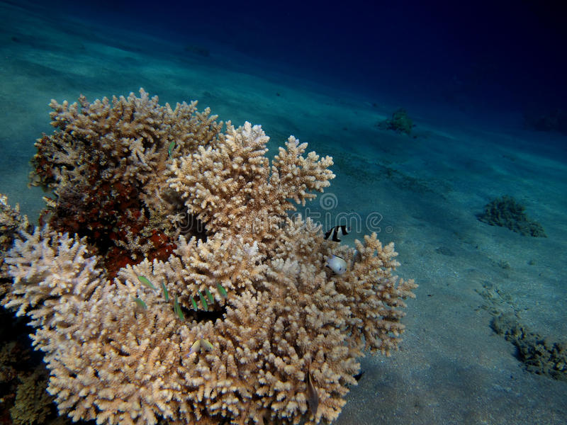 Близкий взгляд коралла стоковые изображения rf