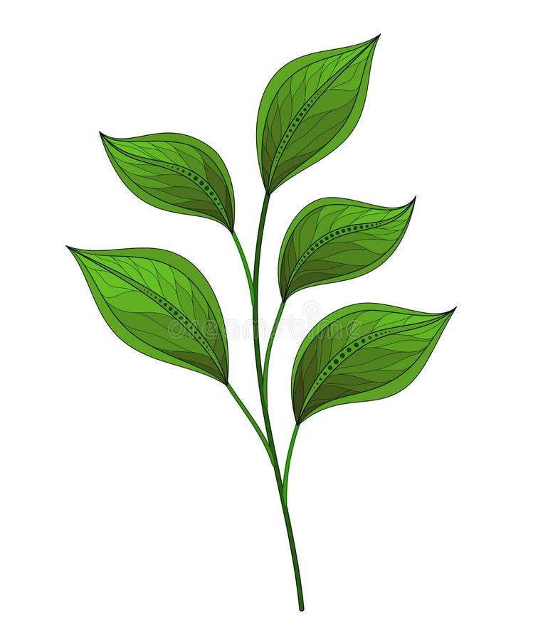 красивейший вектор листьев бесплатная иллюстрация