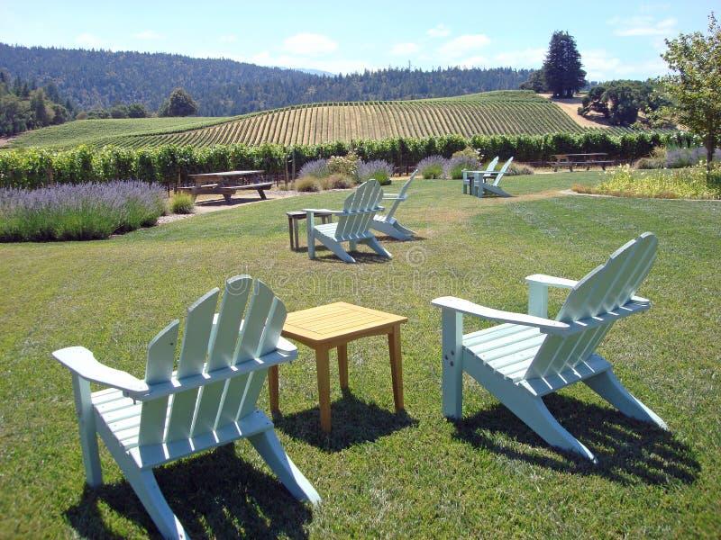 красивейший виноградник california северный стоковое фото rf