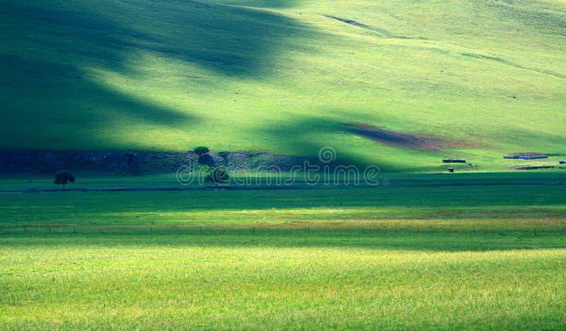 красивейший выгон стоковая фотография rf