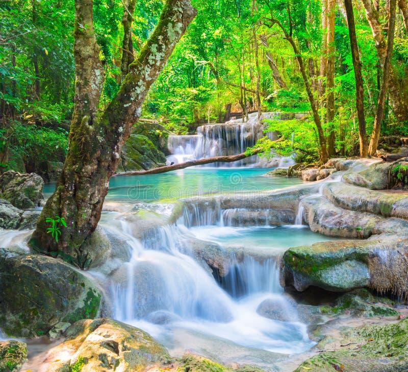 красивейший глубокий водопад пущи стоковые изображения rf