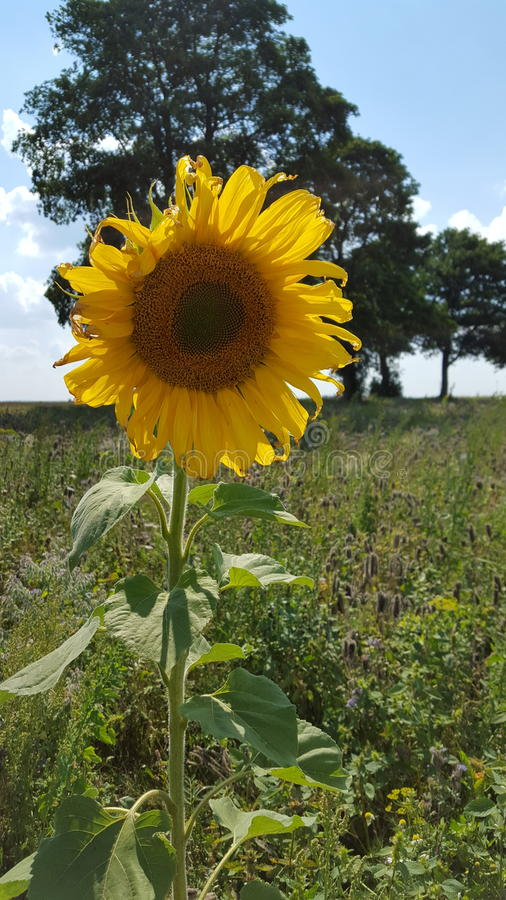 красивейший желтый цвет цветка стоковая фотография rf