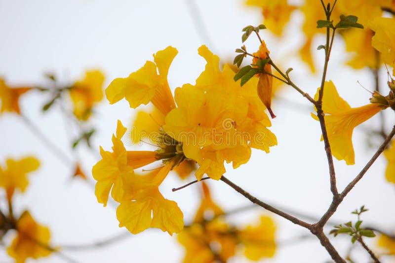 красивейший желтый цвет цветков стоковое фото