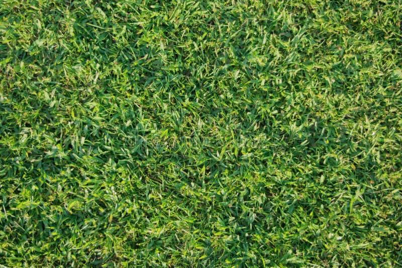 красивейший зеленый цвет травы стоковая фотография