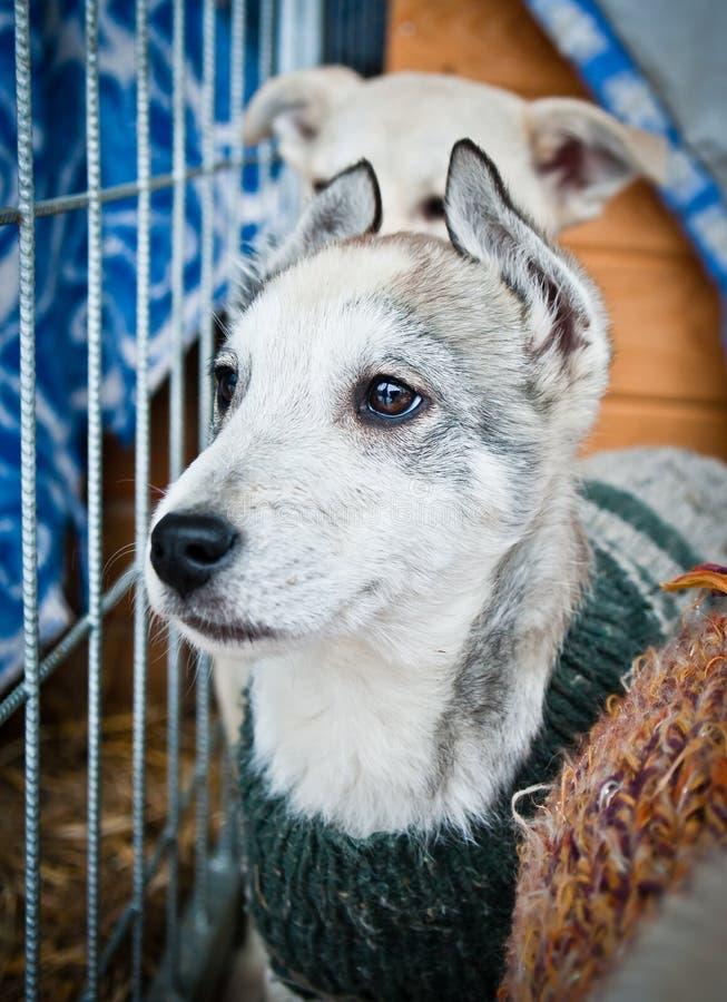 Красивейший и сиротский щенок стоковые фото