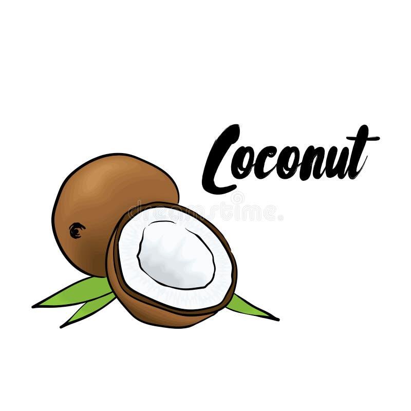 красивейший кокос также вектор иллюстрации притяжки corel fruits тропическо бесплатная иллюстрация