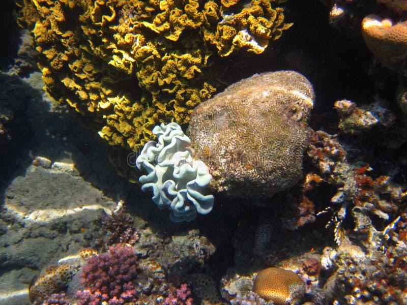 Красивейший коралл стоковые изображения rf