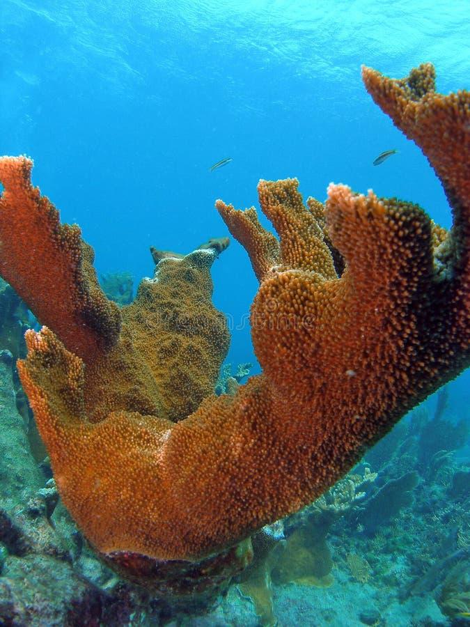 красивейший коралловый риф стоковые фотографии rf