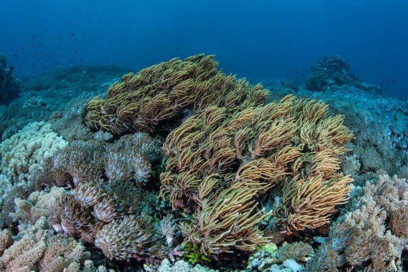 красивейший коралловый риф стоковое фото